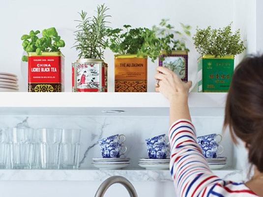 気軽にグリーンを取り込む暮らし!ミニ観葉植物の意外な飾り方まとめ